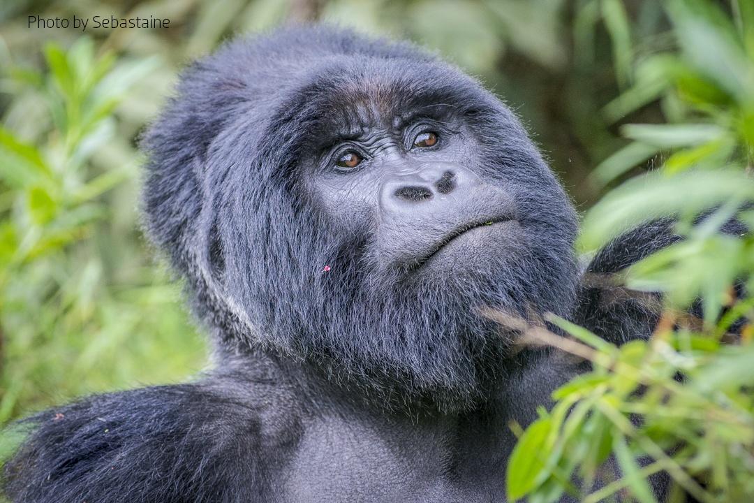 5 days Bwindi Impenetrable National Park Safari