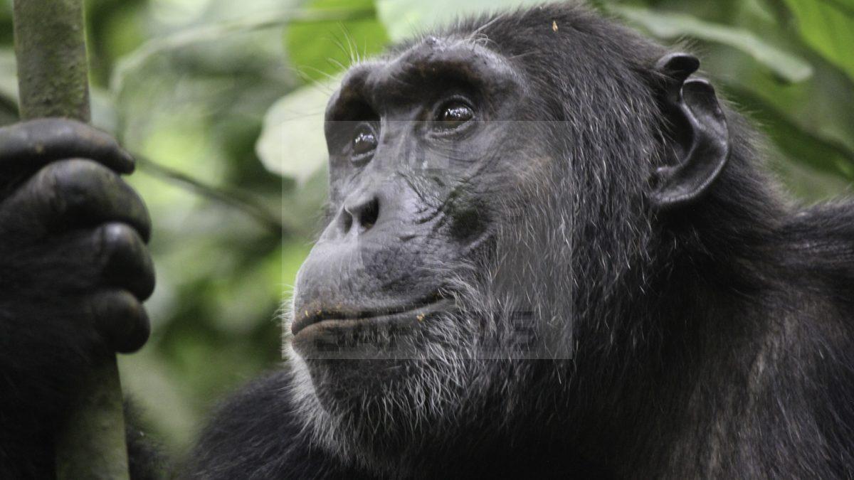 3 Day Uganda Gorilla trekking Safari to Bwindi National Park