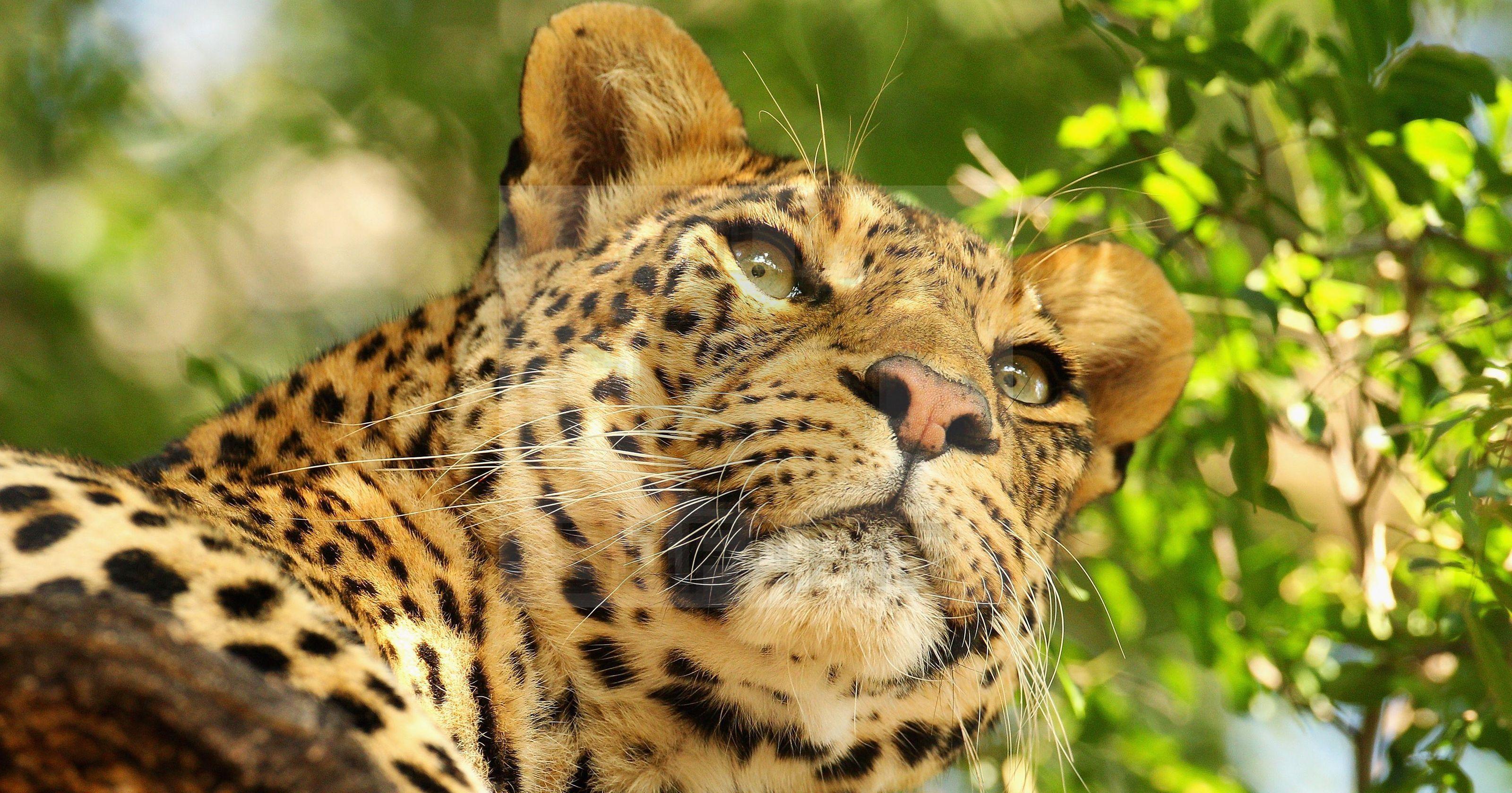 Kidepo Valley Wildlife Safari