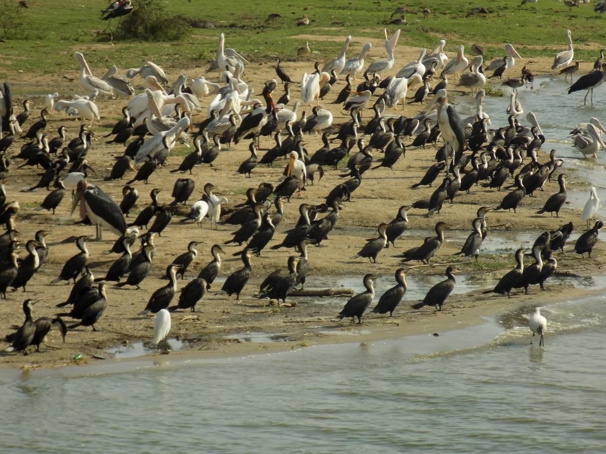 Birding Destinations in Uganda