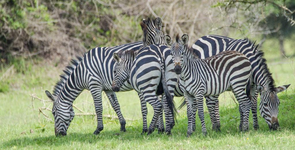 3 Days Wildlife Safari Uganda Tour