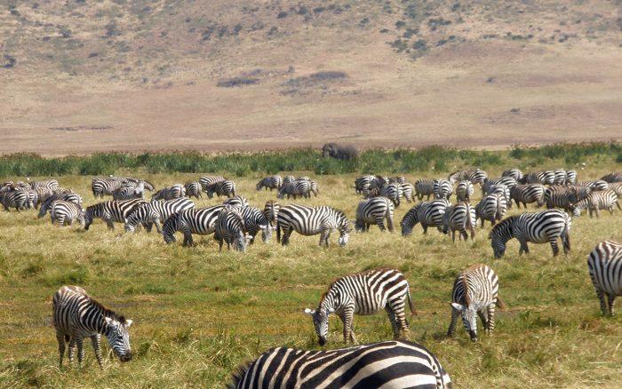 Kenya Wildlife Safaris