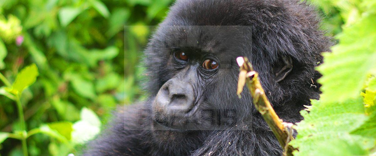 10 Days Uganda Wildlife Safari