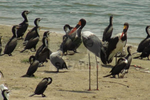 uganda wildlife tour