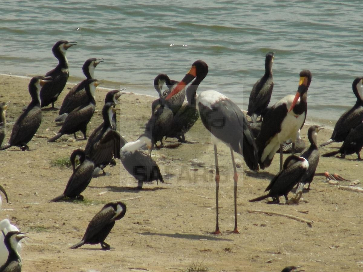 15 Days Uganda Bird Watching Safari
