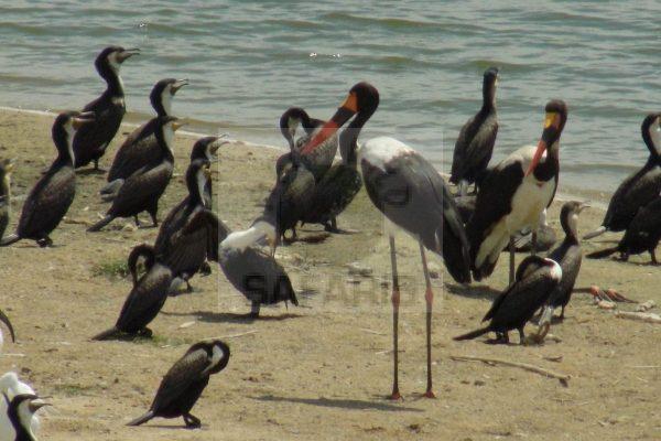 Akagera Rwanda Birding Safari