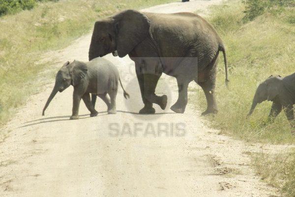 Rwanda Safaris Tour