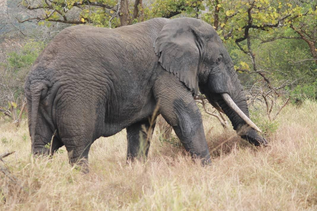 Uganda Safari Parks