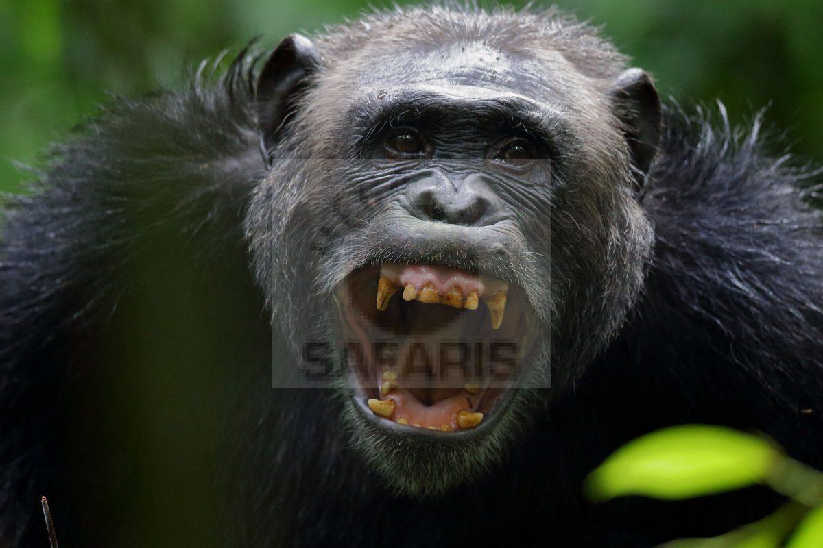 6 days wildlife safari Uganda
