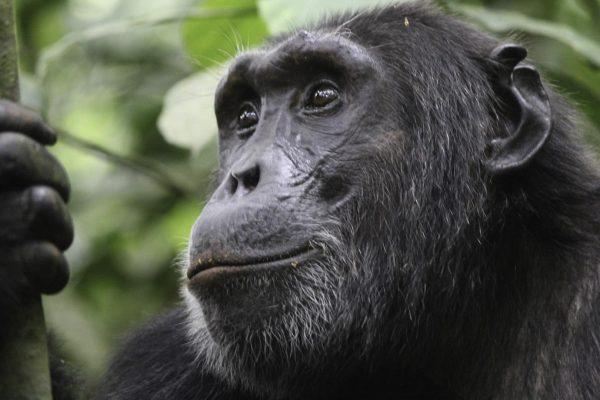 Rwanda Wildlife safaris