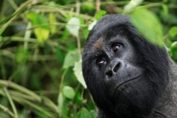 Rwanda wildlife Safaris Tour