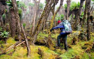 9 Days Nyiragongo Volcano Hiking Tour Rwanda Wildlife Safari