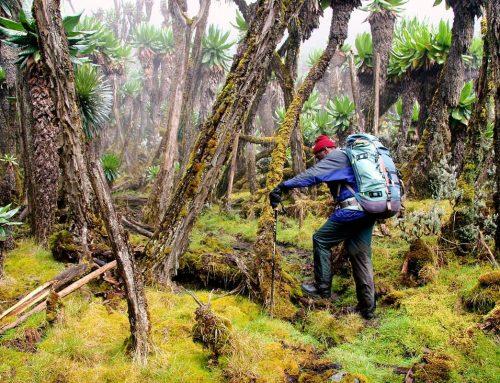 9 Days Nyiragongo Volcano Hiking Tour Rwanda Wildlife Safari