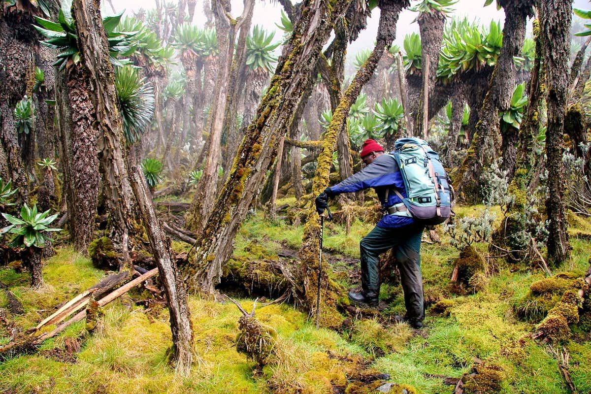Meru National Park
