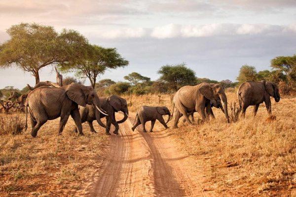 Kenya safari destinations