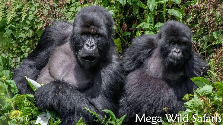 7 Day Rwanda Wildlife Safari Tour