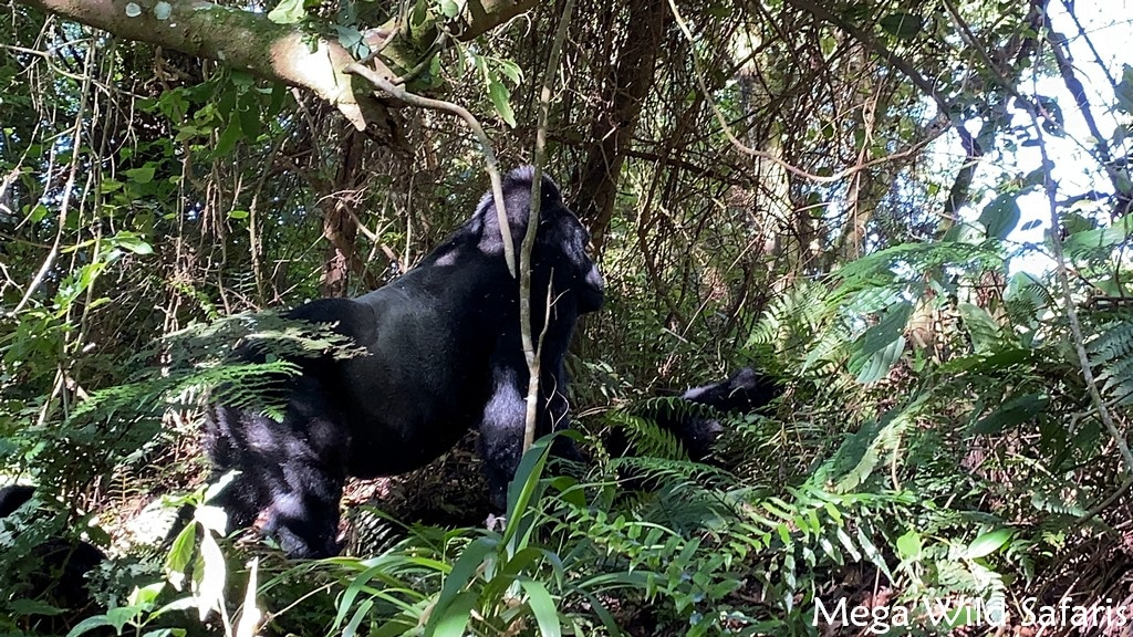 7 Day Rwanda Wildlife Safari