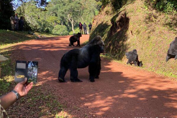 5 days Bwindi Uganda Gorilla Safari Tour