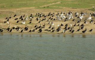 Uganda Safari to Kabaka's Lake