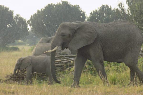 5 Days Uganda Wildlife Safaris Primate tour