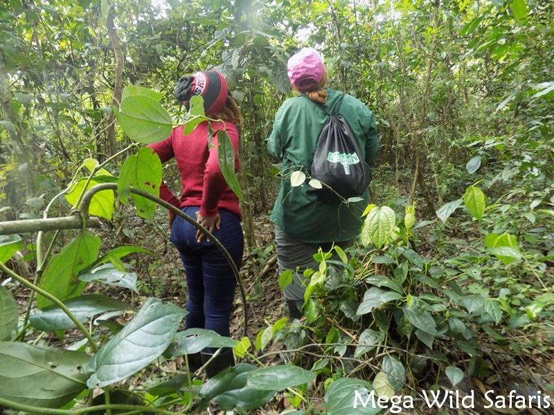 7 days Rwanda Wildlife Safaris