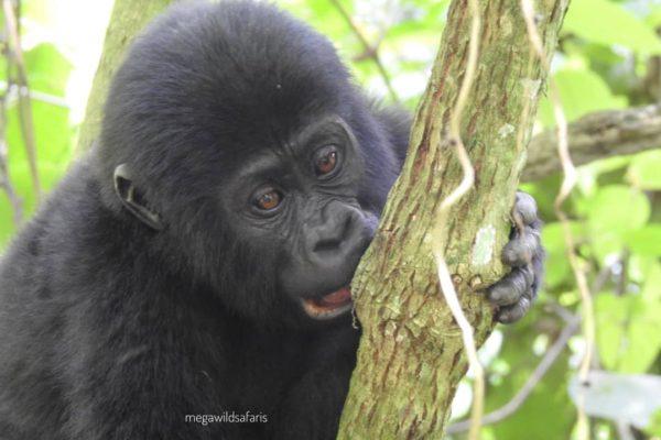 All Africa Safari Adventure Ideas