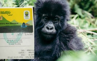 Gorilla Permits Booking Process in Uganda
